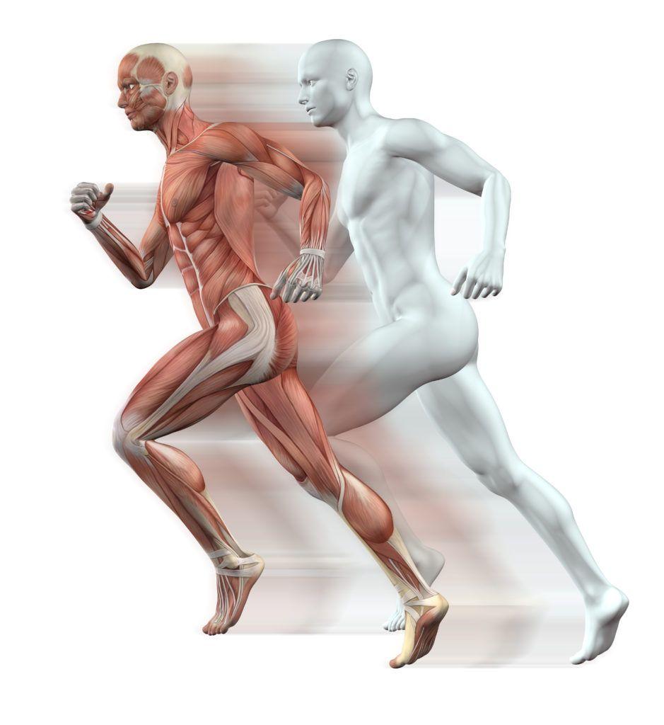 กล้ามเนื้อไม่เท่ากัน Muscle Imbalance