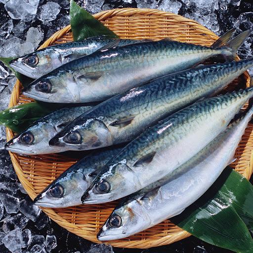ปลาแมคเคอรอล